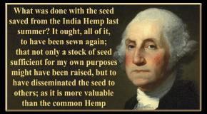 American Marijuana History