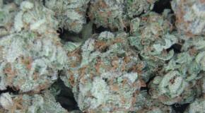 Marijuana: A General Overview