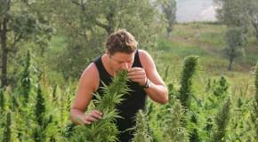 Another Great Marijuana Documentary: Strain Hunters India Expedition