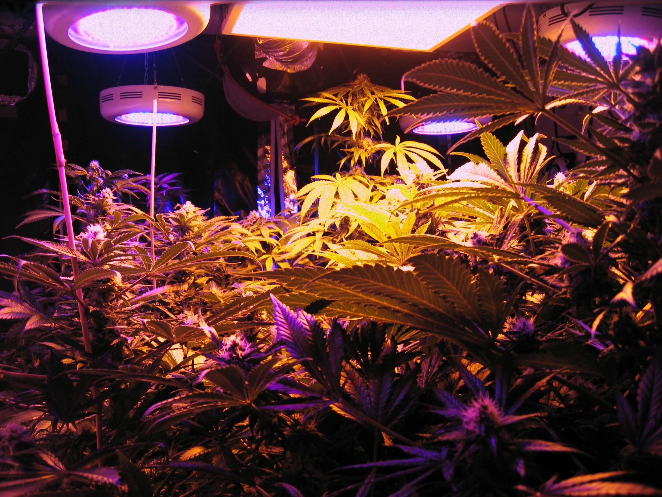 Ask Alex #1: Which light do I use to grow my cannabis?