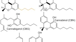 CBD Helps With Wide Range of Ailments
