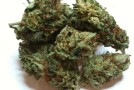 Medical Cannabis Strains Guide and Uses