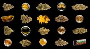 2013 HIGH TIMES Cannabis Cup Entries