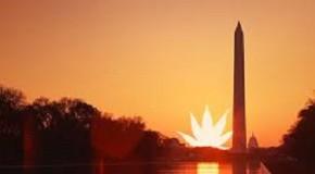 DC Legalizes Marijuana under 'Initiative 71'