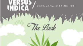 Sativa vs Indica – Infographic