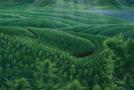 Cannabis Economy to Restore Trust in America