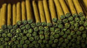 Honest Marijuana Company's Unique, Retrofitted Cigarello Machine Revolutionizes Blunt Rolling (250K+ Blunts Rolled)