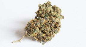 How To Select the Right Medical Marijuana Strain